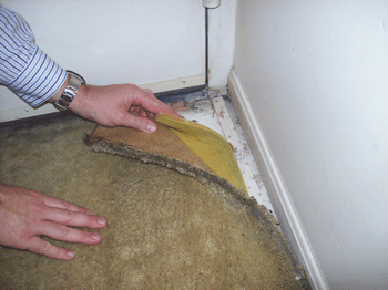 How To Clean Wet Moldy Carpet